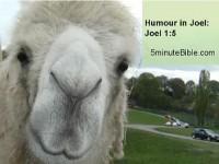 Humour in the Bible: Book 29: Joel 1:5